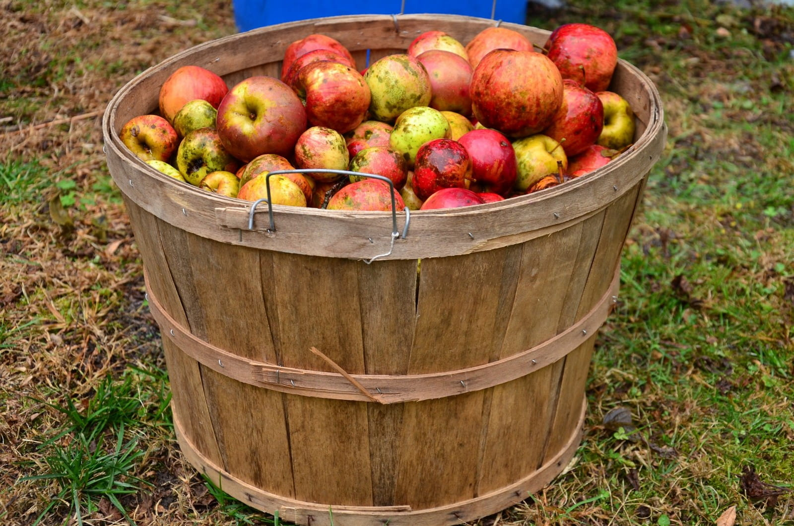 Top food matches for cider