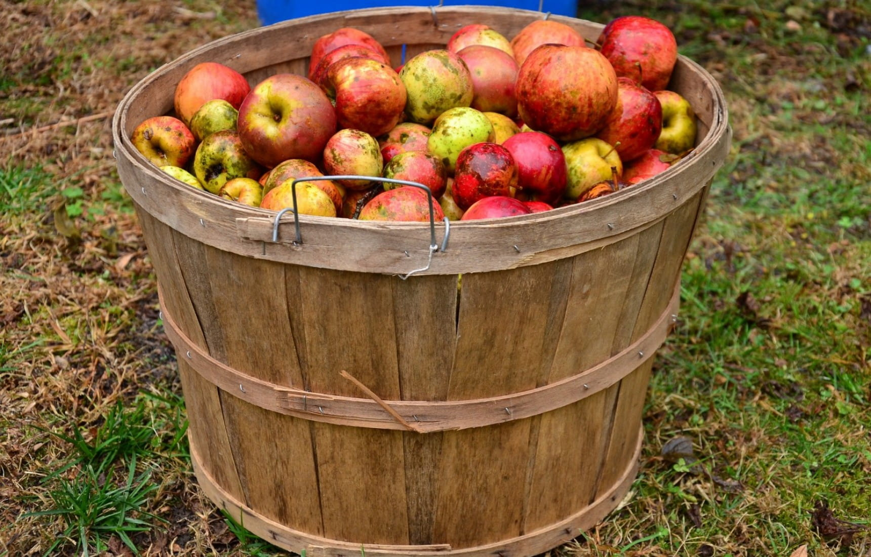 Top food pairings for cider | Matching Food & Wine